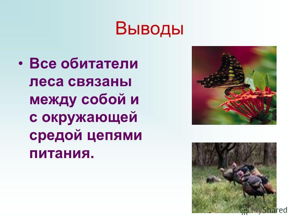 Выводы Все обитатели леса связаны между собой и с окружающей средой цепями питания.