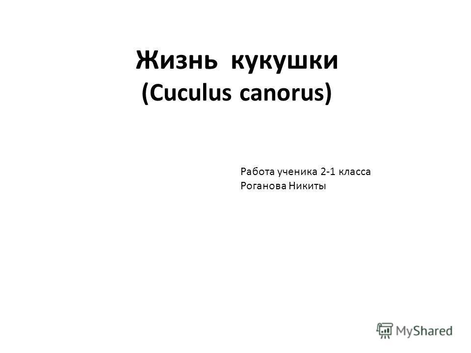 Жизнь кукушки (Cuculus canorus) Работа ученика 2-1 класса Роганова Никиты