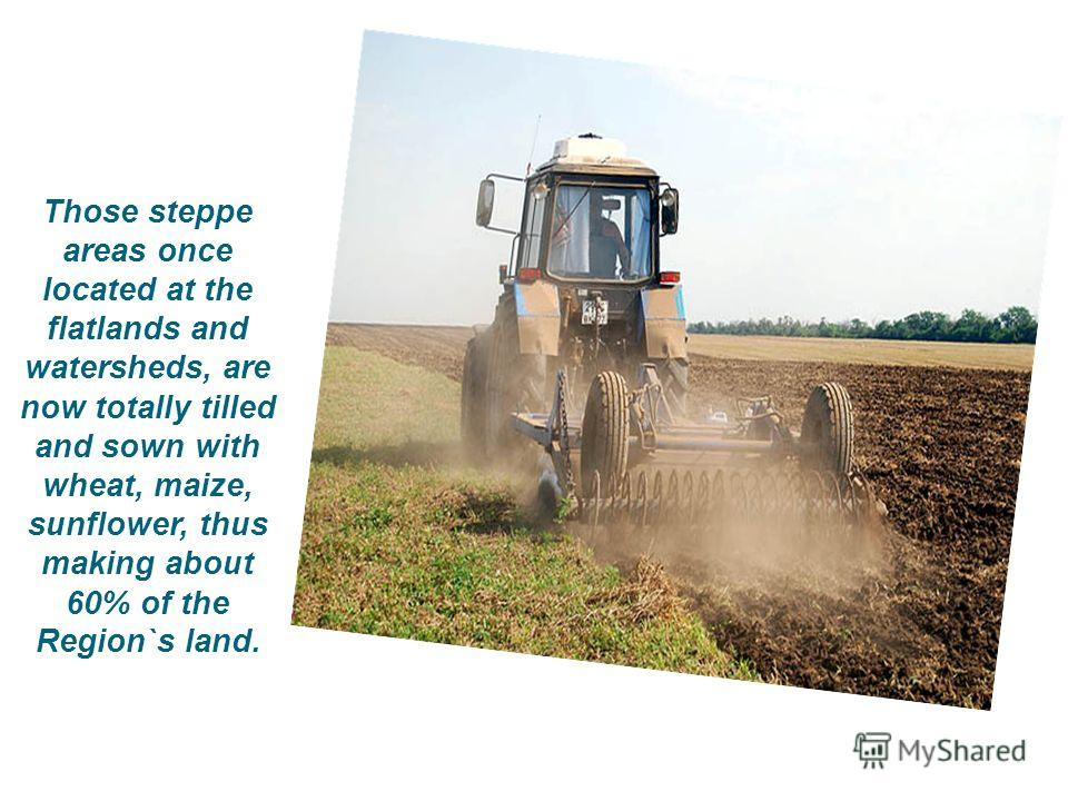 Those steppe areas once located at the flatlands and watersheds, are now totally tilled and sown with wheat, maize, sunflower, thus making about 60% of the Region`s land.