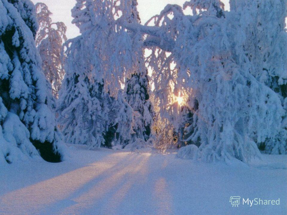 Зимушка, снежный, иней, ветви, блестит, сугробы, хлопья, снежинки, серебристый, узоры, великолепный.