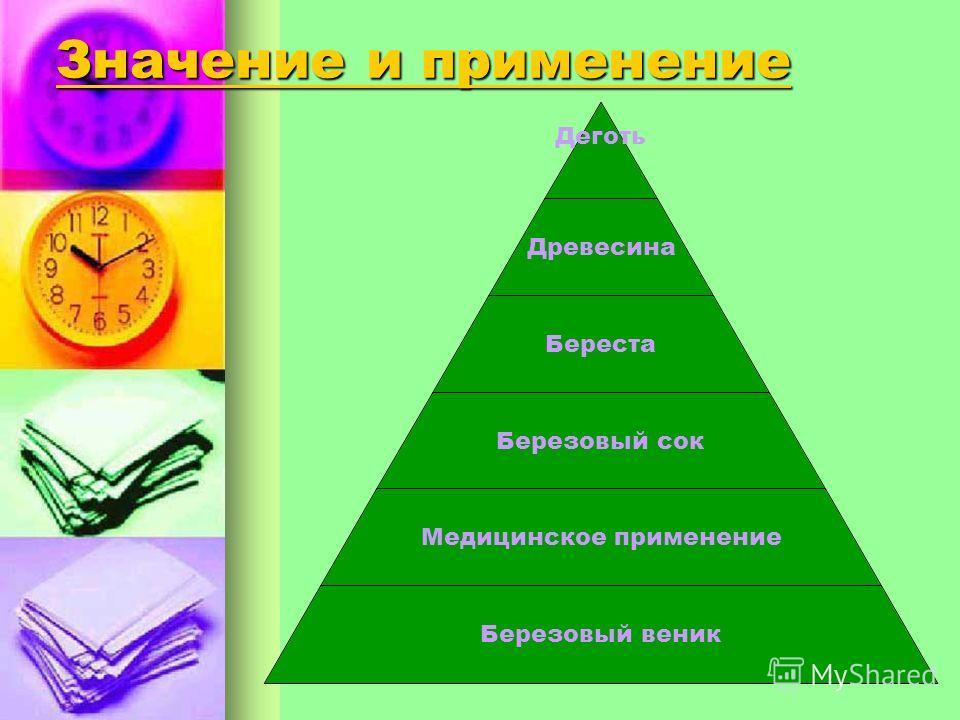 Классификация березы остролистнаятощаядаурскаяФарженизкаяжёлтаяребристая