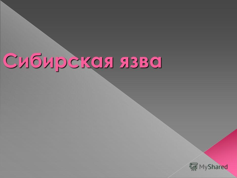 Сибирская язва Сибирская язва