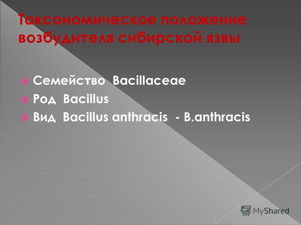 Таксономическое положение возбудителя сибирской язвы Семейство Bacillaceae Род Bacillus Вид Bacillus anthracis - B.anthracis