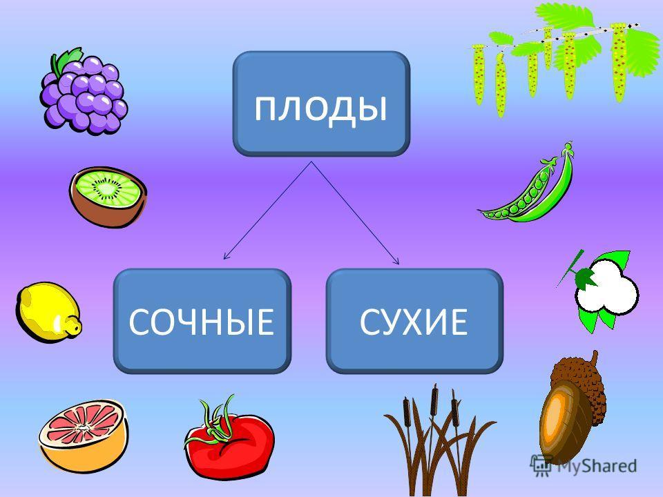 плоды СУХИЕ