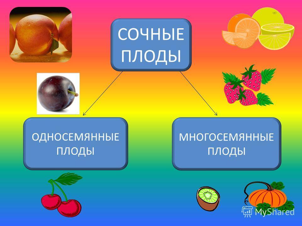 плоды СУХИЕСОЧНЫЕ
