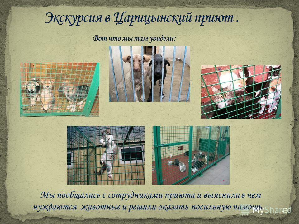 Мы пообщались с сотрудниками приюта и выяснили в чем нуждаются животные и решили оказать посильную помощь. 15