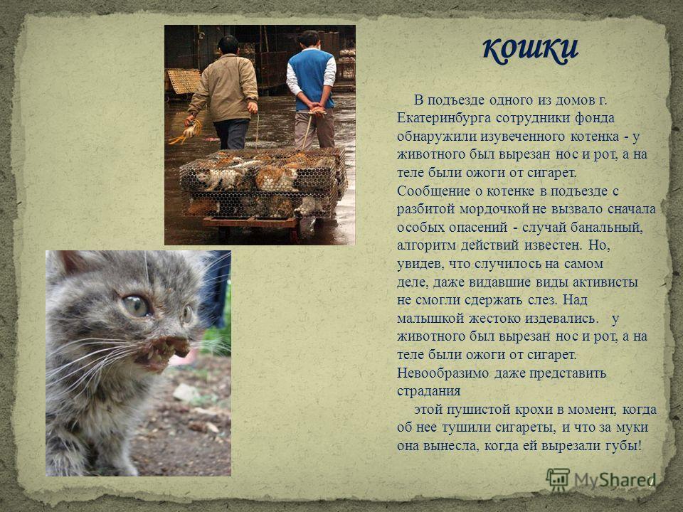 В подъезде одного из домов г. Екатеринбурга сотрудники фонда обнаружили изувеченного котенка - у животного был вырезан нос и рот, а на теле были ожоги от сигарет. Сообщение о котенке в подъезде с разбитой мордочкой не вызвало сначала особых опасений
