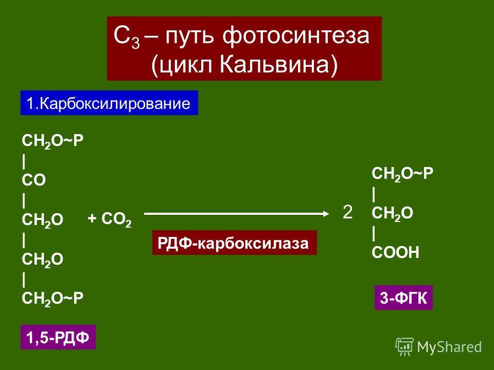 С 3 – путь фотосинтеза (цикл Кальвина) 1.Карбоксилирование CH 2 O~P | CO | CH 2 O | CH 2 O | CH 2 O~P + CO 2 1,5-РДФ CH 2 O~P | CH 2 O | CОOH 2 РДФ-карбоксилаза 3-ФГК