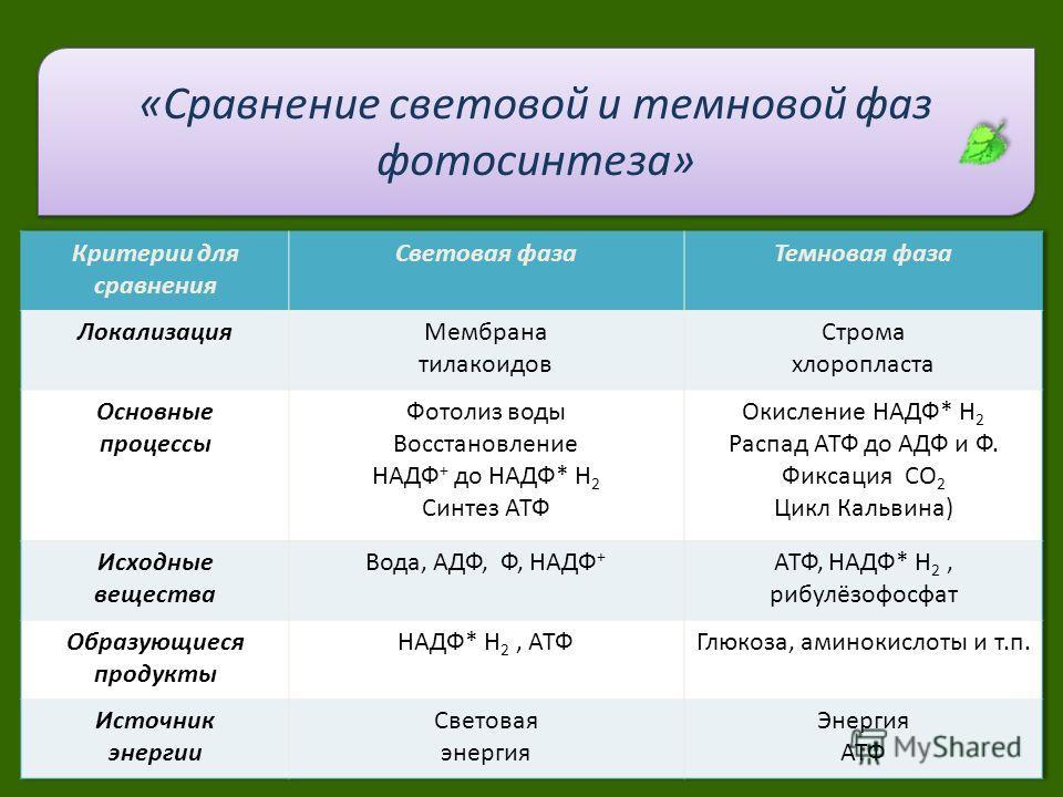 Сравнительная характеристика про световая фаза темную фотосинтеза 9 класс