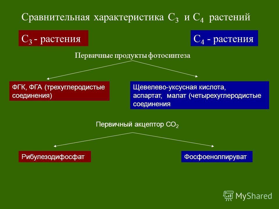 С 3 - растенияС 4 - растения Сравнительная характеристика С 3 и С 4 растений Первичные продукты фотосинтеза ФГК, ФГА (трехуглеродистые соединения) Щевелево-уксусная кислота, аспартат, малат (четырехуглеродистые соединения Первичный акцептор СО 2 Рибу