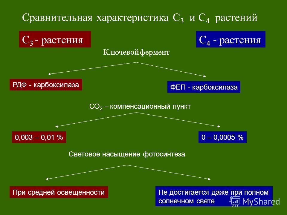 С 3 - растенияС 4 - растения Сравнительная характеристика С 3 и С 4 растений Ключевой фермент РДФ - карбоксилаза ФЕП - карбоксилаза Световое насыщение фотосинтеза 0,003 – 0,01 %0 – 0,0005 % СО 2 – компенсационный пункт При средней освещенностиНе дост