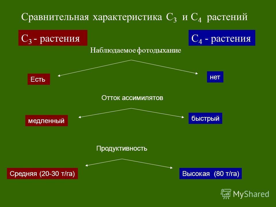 С 3 - растенияС 4 - растения Сравнительная характеристика С 3 и С 4 растений Наблюдаемое фотодыхание Есть нет Продуктивность медленный быстрый Отток ассимилятов Средняя (20-30 т/га)Высокая (80 т/га)
