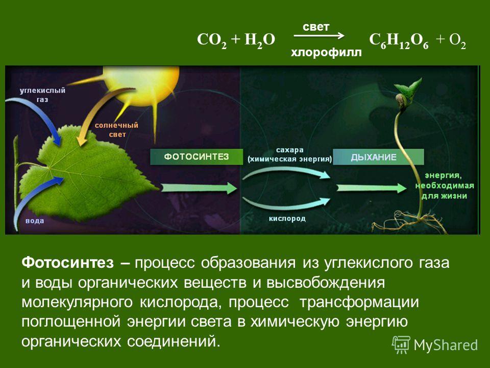 Фотосинтез – процесс образования из углекислого газа и воды органических веществ и высвобождения молекулярного кислорода, процесс трансформации поглощенной энергии света в химическую энергию органических соединений. свет хлорофилл СО 2 + Н 2 ОС 6 Н 1