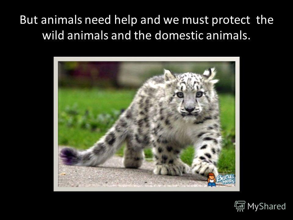 Wild animals are very fierce.
