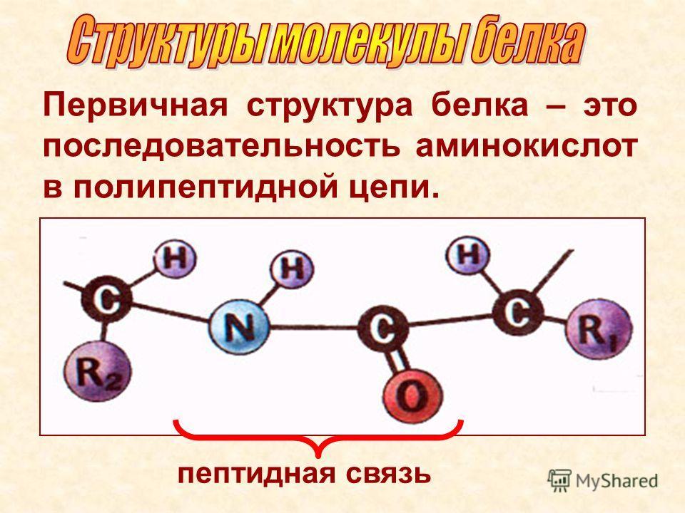 Первичная структура белка – это последовательность аминокислот в полипептидной цепи. пептидная связь