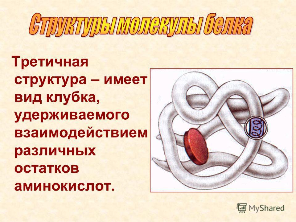 Третичная структура – имеет вид клубка, удерживаемого взаимодействием различных остатков аминокислот.