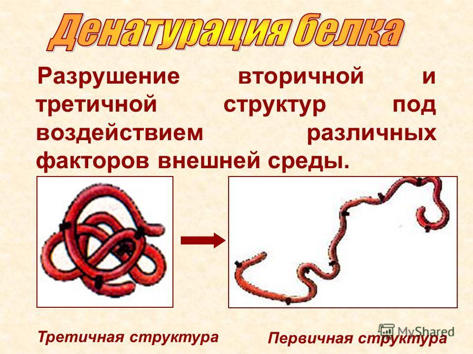 Разрушение вторичной и третичной структур под воздействием различных факторов внешней среды. Третичная структура Первичная структура