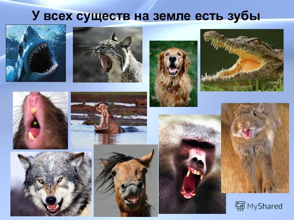 У всех существ на земле есть зубы