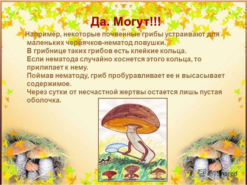 В сказке «Война грибов» гриб Боровик собирал грибы на войну с царем Горохом. Отказались белянки: «Мы - грибовые дворянки!», отказались и рыжики: «У нас ножки очень тонкие». А на самом деле, могут ли грибы воевать?