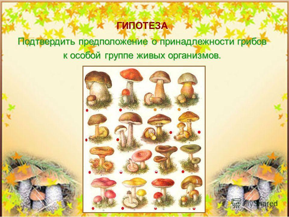 1. Исследовать разновидности грибов. 2. Представить их классификацию и характеристику. 3. Доказать принадлежность грибов к группе живых организмов. 4. Определить их роль и значение для человека, а также животного и растительного мира. ЗАДАЧИ ИССЛЕДОВ