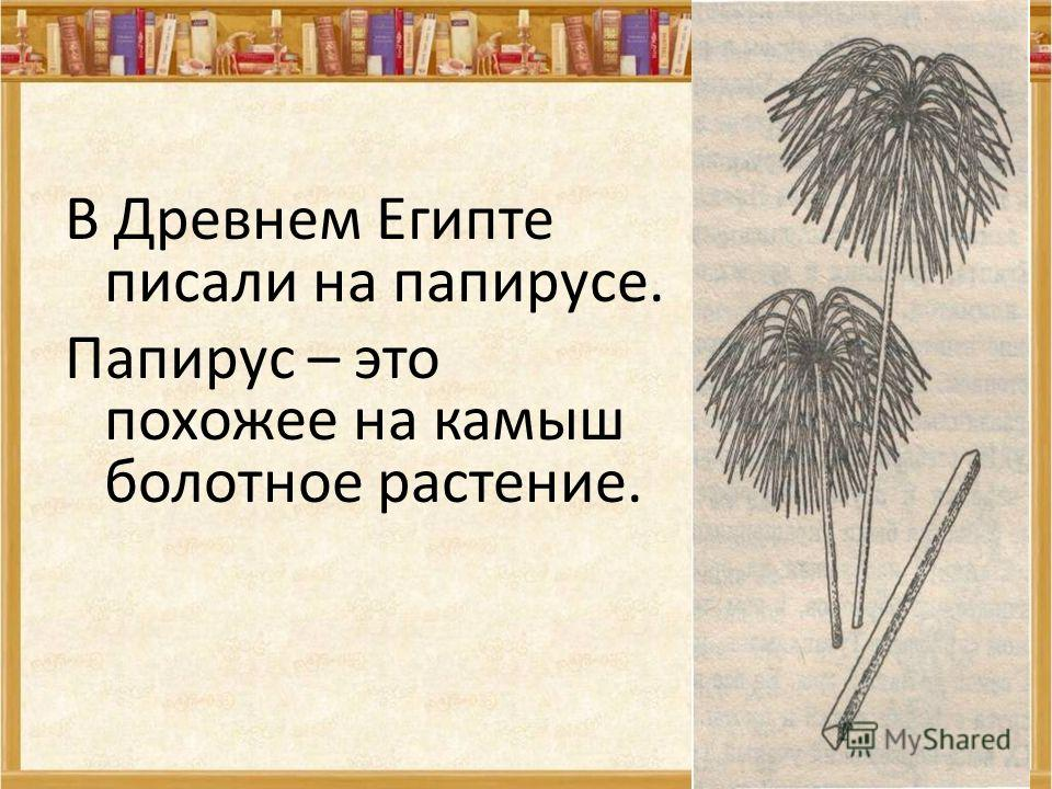 В Древнем Египте писали на папирусе. Папирус – это похожее на камыш болотное растение.