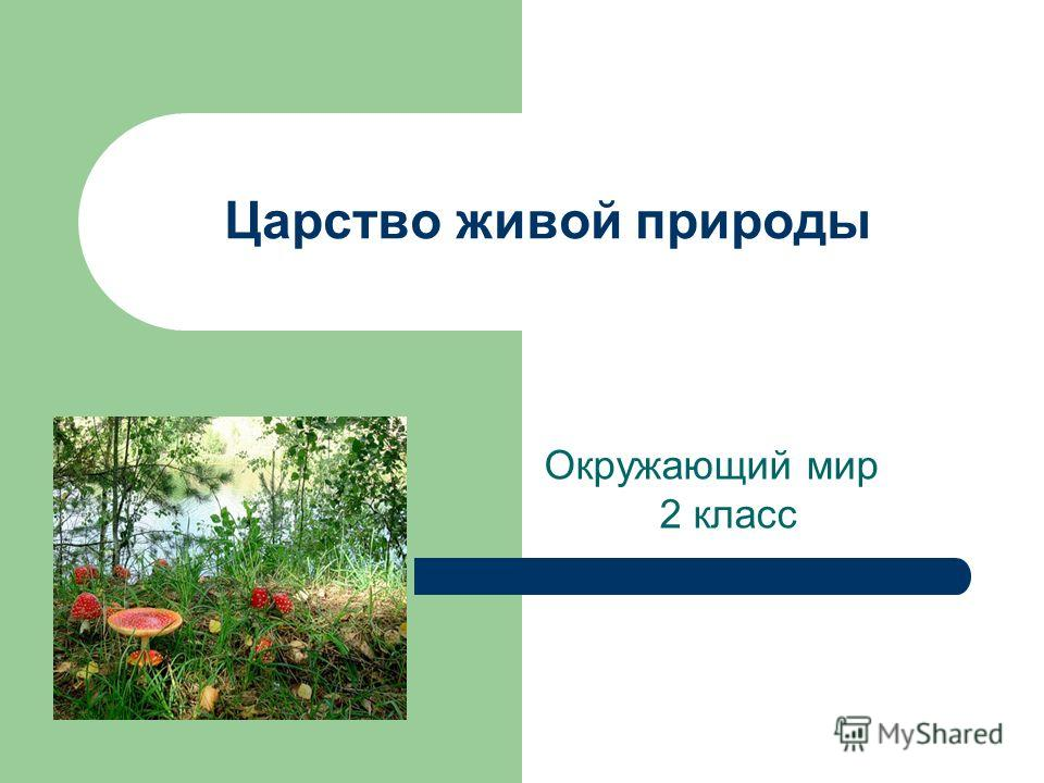 Тесты по окружающему миру тема животные и растения поля 4 класс умк планета знаний