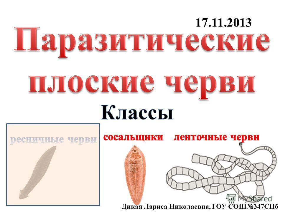 17.11.2013 Дикая Лариса Николаевна, ГОУ СОШ347СПб