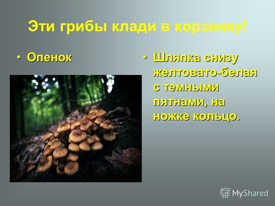 Эти грибы клади в корзинку! ОпенокОпенок Шляпка снизу желтовато-белая с темными пятнами, на ножке кольцо.Шляпка снизу желтовато-белая с темными пятнами, на ножке кольцо.