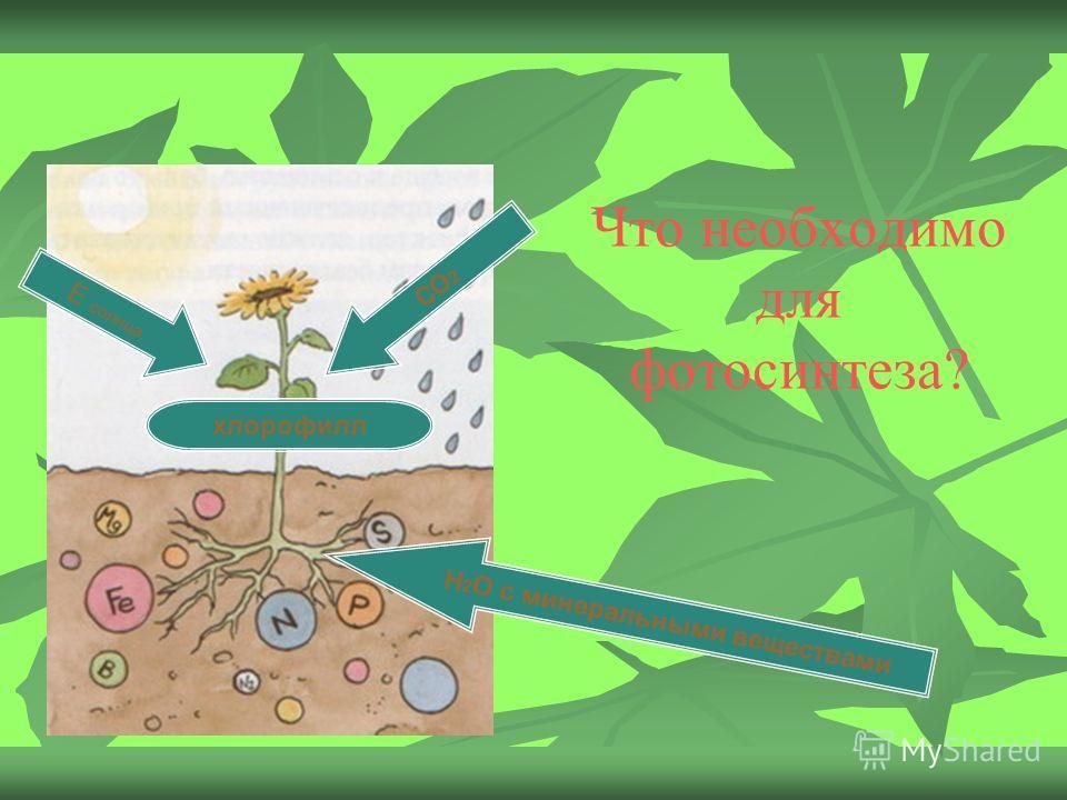 Что необходимо для фотосинтеза? Н 2 О с минеральными веществами Е солнца СО 2 хлорофилл