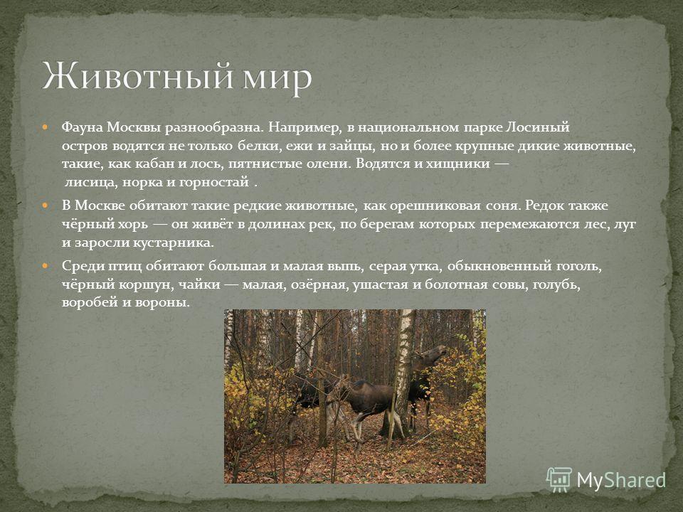 Фауна Москвы разнообразна. Например, в национальном парке Лосиный остров водятся не только белки, ежи и зайцы, но и более крупные дикие животные, такие, как кабан и лось, пятнистые олени. Водятся и хищники лисица, норка и горностай. В Москве обитают