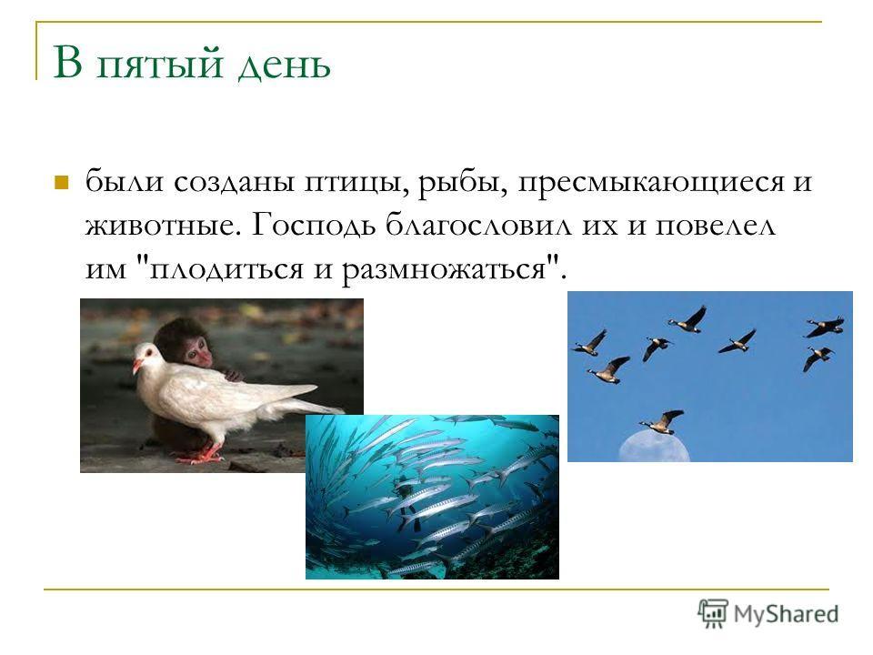 В пятый день были созданы птицы, рыбы, пресмыкающиеся и животные. Господь благословил их и повелел им плодиться и размножаться.