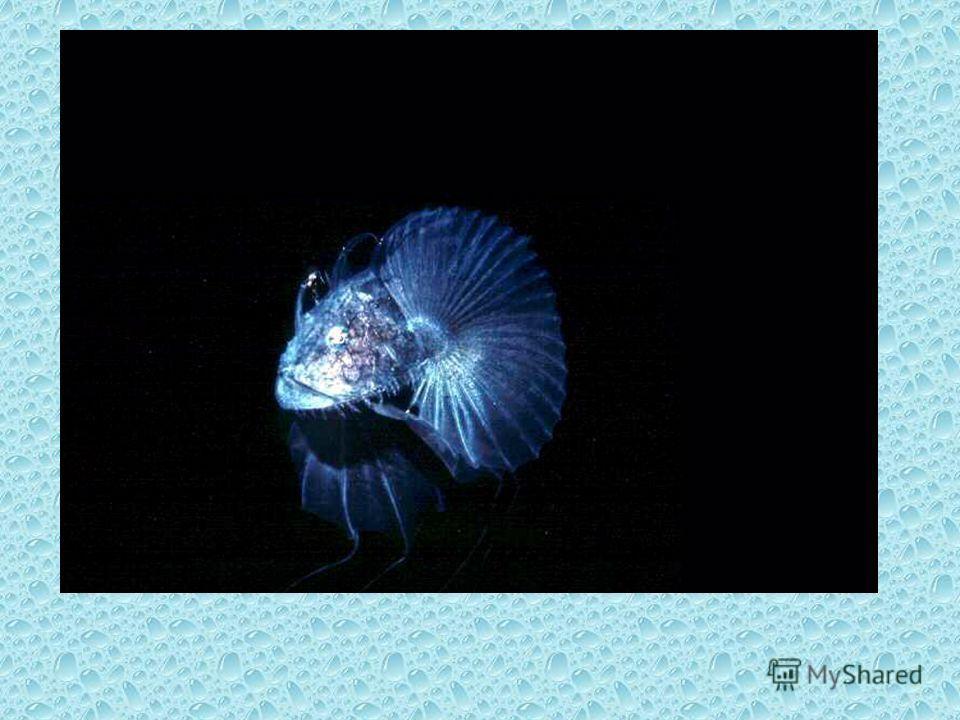 Светящиеся глубоководные животные