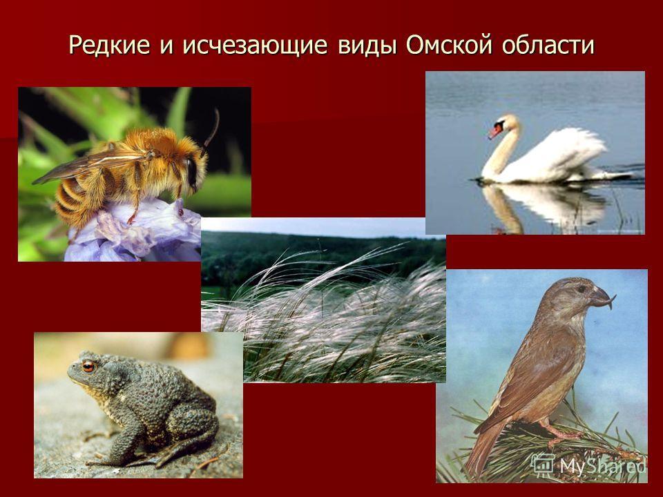 Редкие и исчезающие виды Омской области