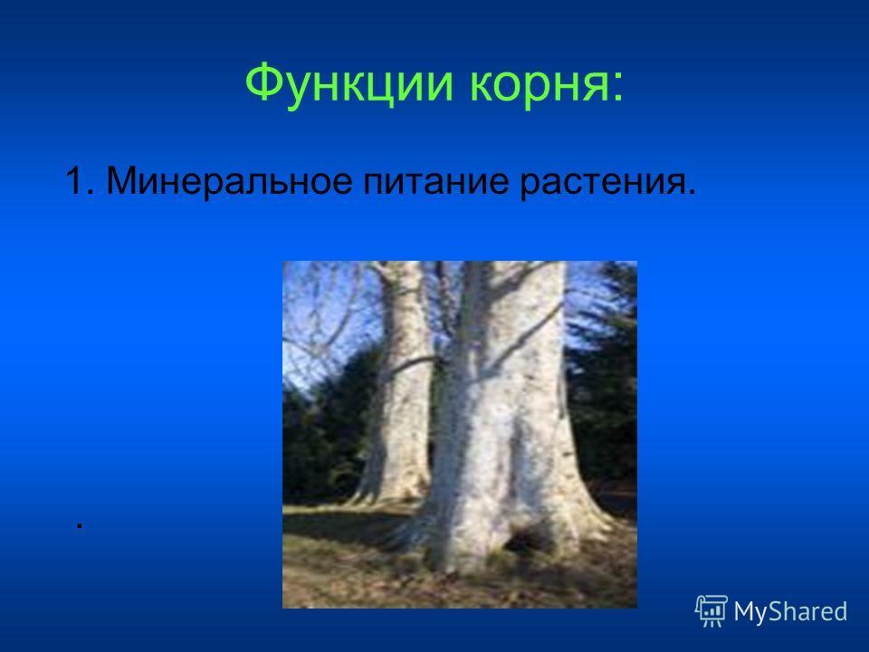 Функции корня: 1. Минеральное питание растения..