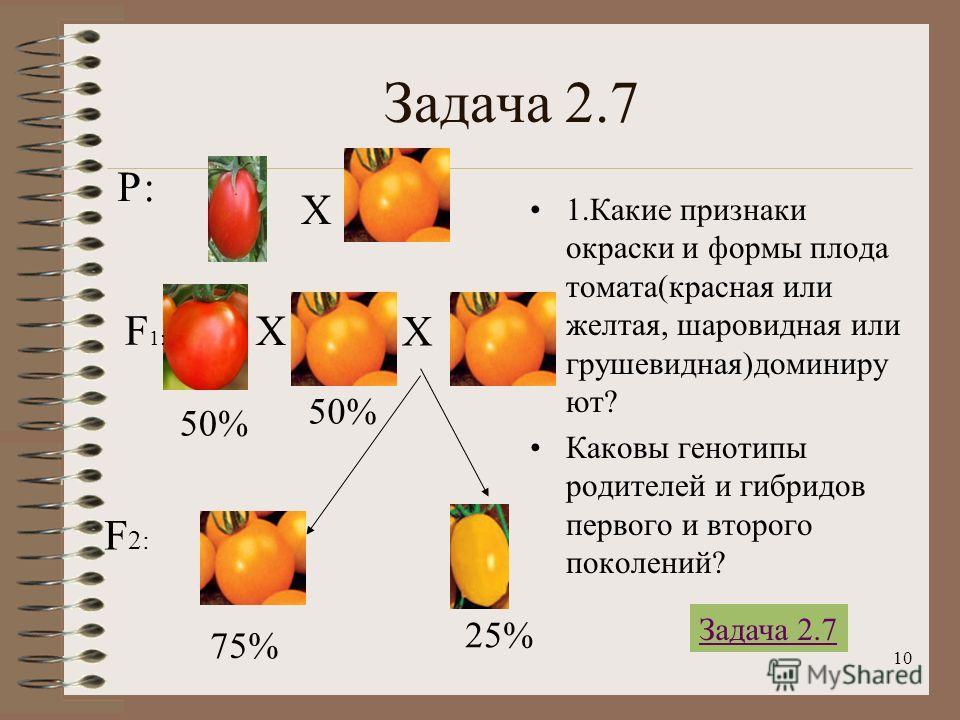 10 Задача 2.7 1.Какие признаки окраски и формы плода томата(красная или желтая, шаровидная или грушевидная)доминиру ют? Каковы генотипы родителей и гибридов первого и второго поколений? Р: Х Х F 1: F 2: 50% 75% Х 50% 25% Задача 2.7