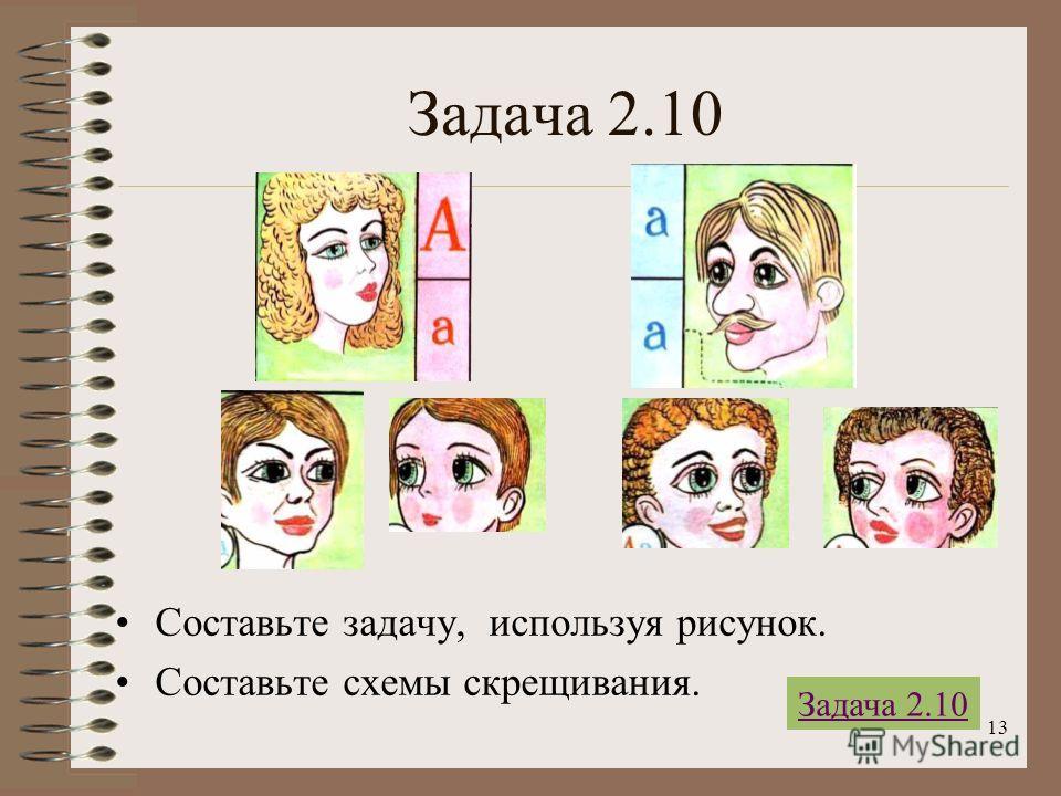13 Задача 2.10 Составьте задачу, используя рисунок. Составьте схемы скрещивания. Задача 2.10
