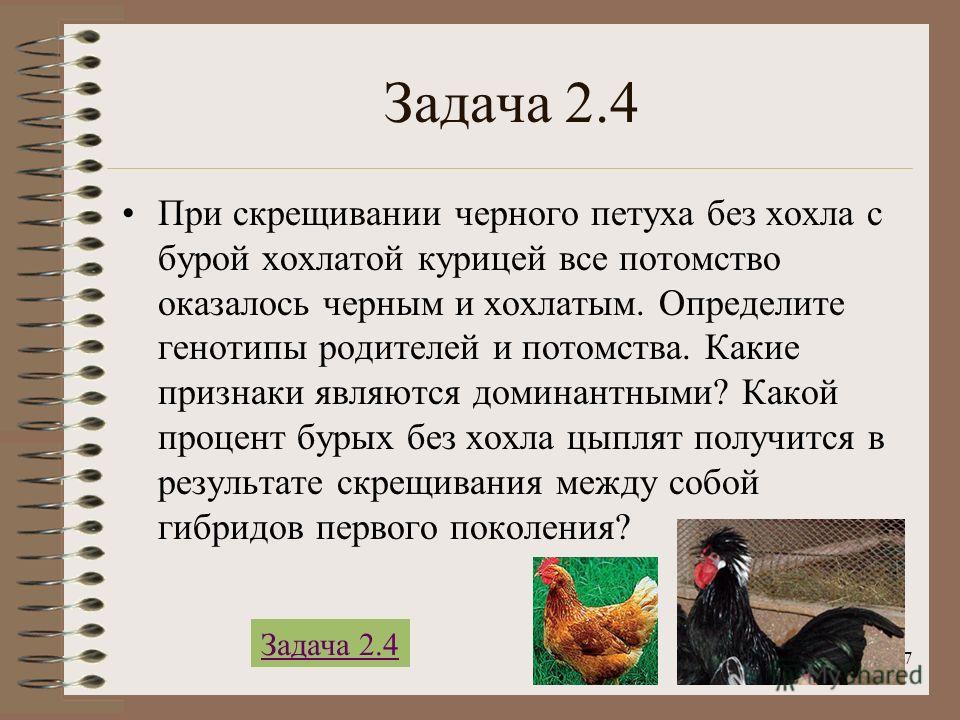 7 Задача 2.4 При скрещивании черного петуха без хохла с бурой хохлатой курицей все потомство оказалось черным и хохлатым. Определите генотипы родителей и потомства. Какие признаки являются доминантными? Какой процент бурых без хохла цыплят получится