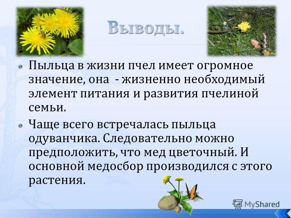 Пыльца в жизни пчел имеет огромное значение, она - жизненно необходимый элемент питания и развития пчелиной семьи. Чаще всего встречалась пыльца одуванчика. Следовательно можно предположить, что мед цветочный. И основной медосбор производился с этого