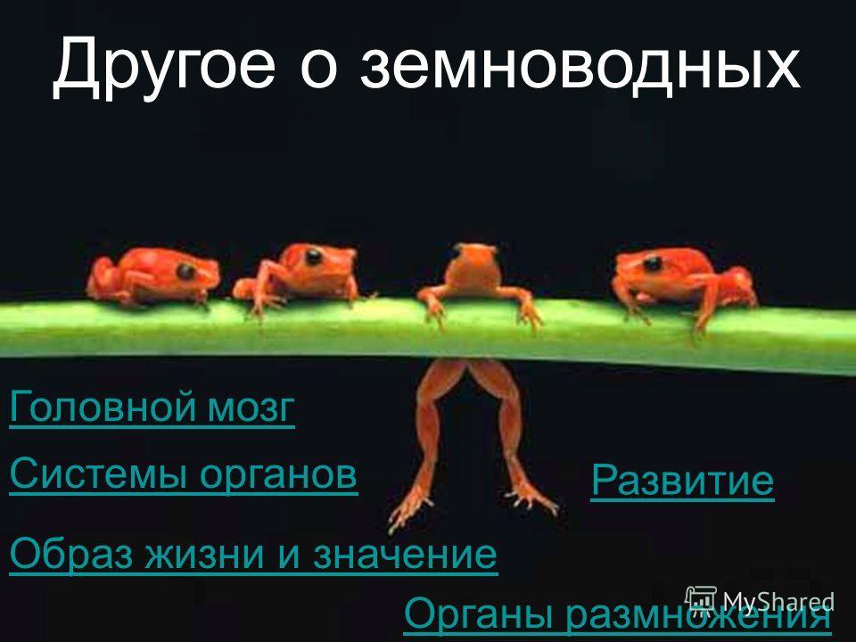 Другое о земноводных Головной мозг Системы органов Развитие Образ жизни и значение Органы размножения
