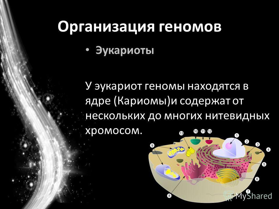 Организация геномов Эукариоты У эукариот геномы находятся в ядре (Кариомы)и содержат от нескольких до многих нитевидных хромосом.