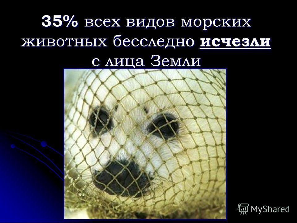 35% всех видов морских животных бесследно исчезли с лица Земли
