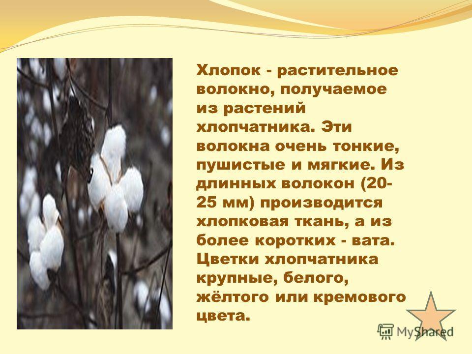 Хлопок - растительное волокно, получаемое из растений хлопчатника. Эти волокна очень тонкие, пушистые и мягкие. Из длинных волокон (20- 25 мм) производится хлопковая ткань, а из более коротких - вата. Цветки хлопчатника крупные, белого, жёлтого или к