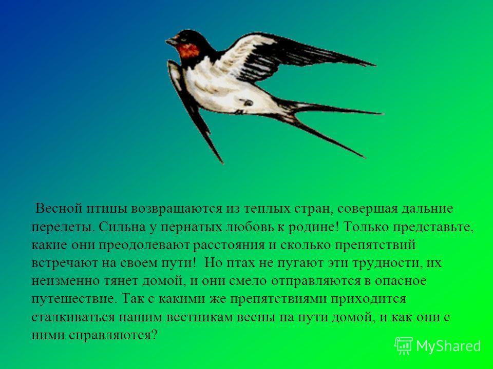 Весной птицы возвращаются из теплых стран, совершая дальние перелеты. Сильна у пернатых любовь к родине! Только представьте, какие они преодолевают расстояния и сколько препятствий встречают на своем пути! Но птах не пугают эти трудности, их неизменн