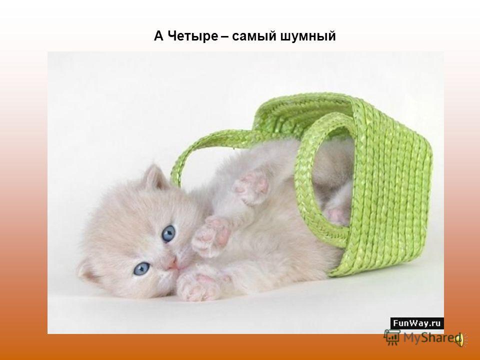 Три - котёнок самый умный