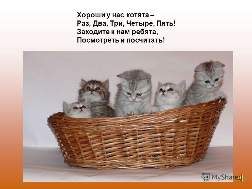 Пять похож на Три и Два – Те же хвост и голова, То же пятнышко на спинке, Так же спит весь день в корзинке.