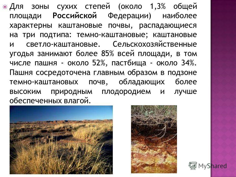 Для зоны сухих степей (около 1,3% общей площади Российской Федерации) наиболее характерны каштановые почвы, распадающиеся на три подтипа: темно-каштановые; каштановые и светло-каштановые. Сельскохозяйственные угодья занимают более 85% всей площади, в