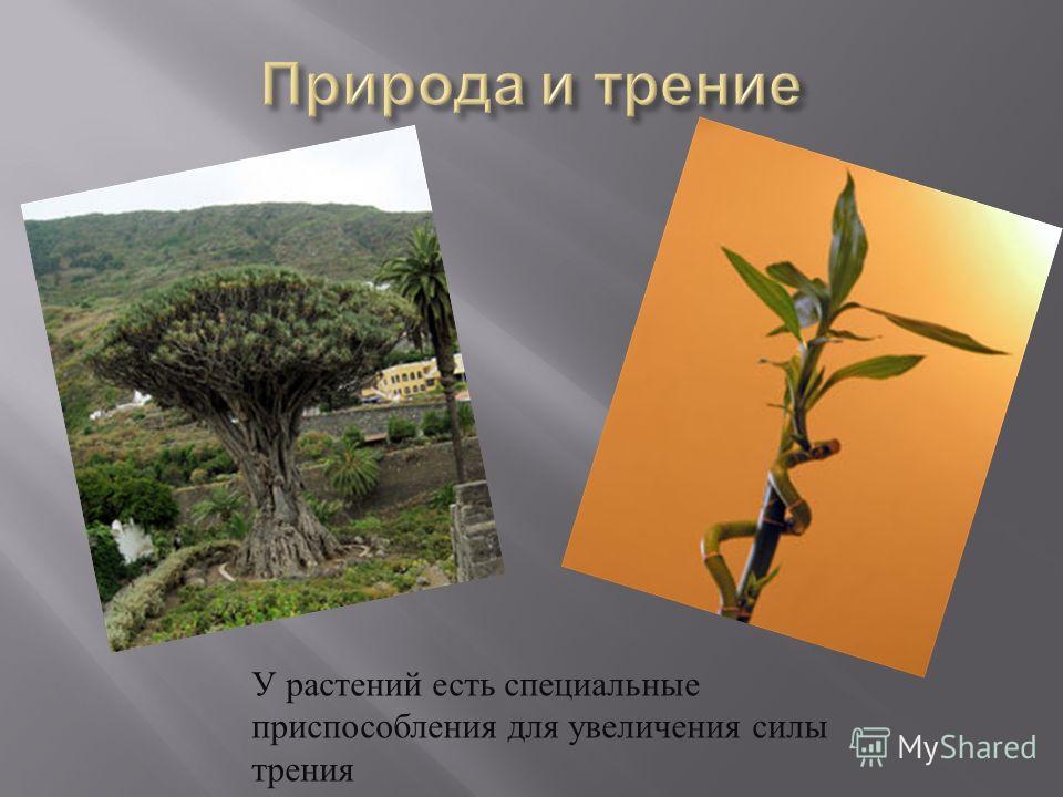 У растений есть специальные приспособления для увеличения силы трения