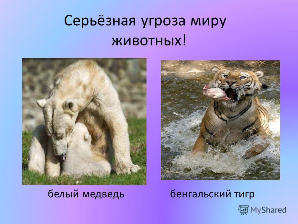Серьёзная угроза миру животных! белый медведь бенгальский тигр