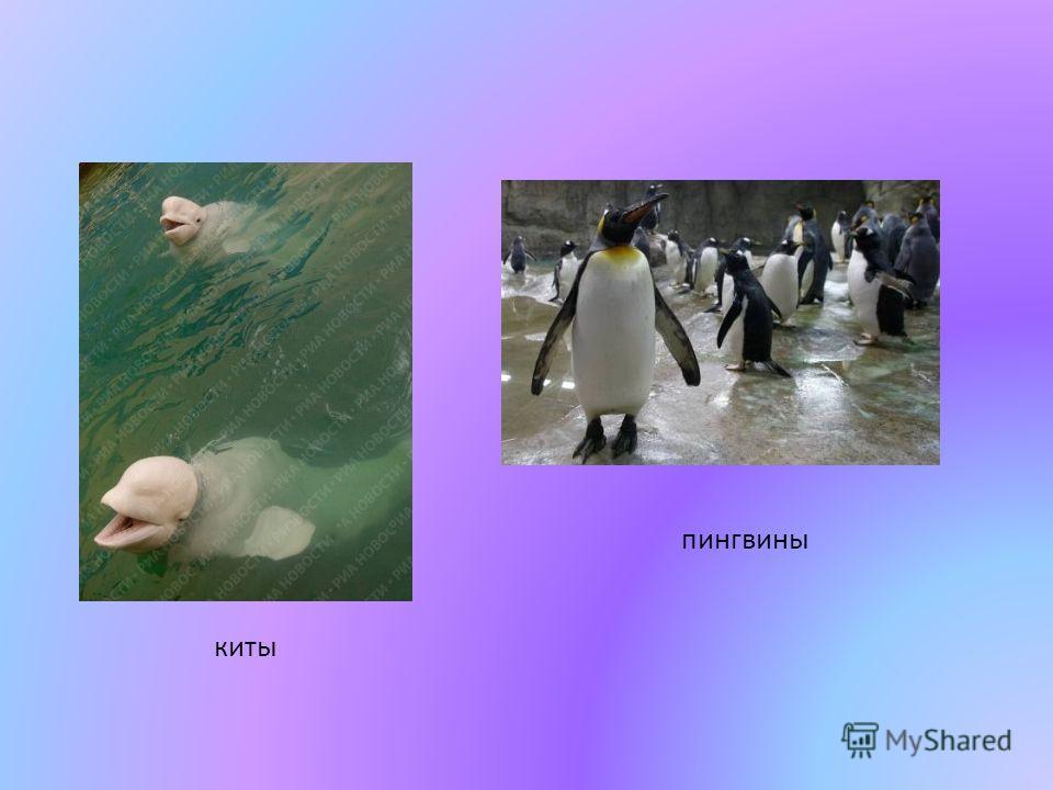 киты пингвины