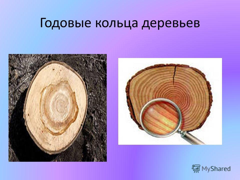Годовые кольца деревьев